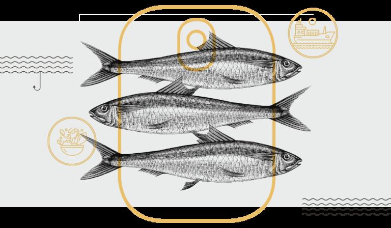 Bioboom Ausgabe 91 – Meerestiere – Geht was oder No-Go?