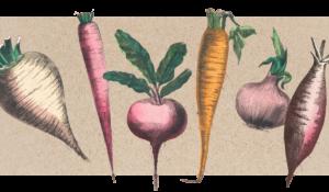 Abbildung von gezeichneten Rüben, Möhren und Zwiebeln
