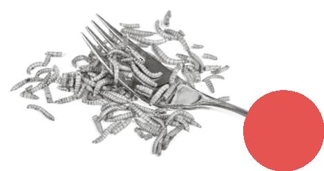 Das Fleisch der Zukunft – Gabel mit Maden